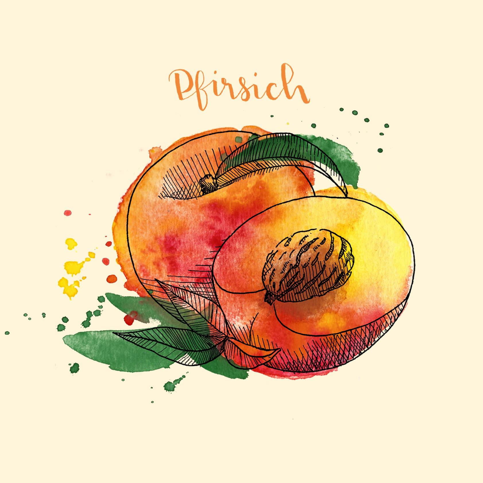 Schöne Pfirsich-Illustration