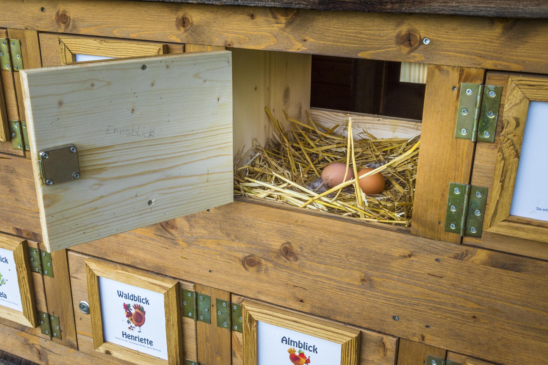 Eier im Stall Prechtlhof Sabrillu