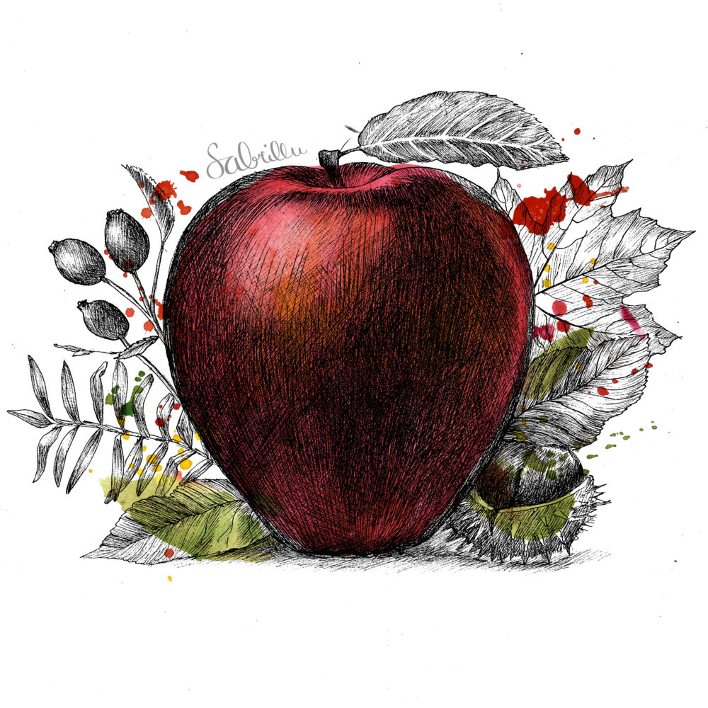apple drawing with ink and watercolours