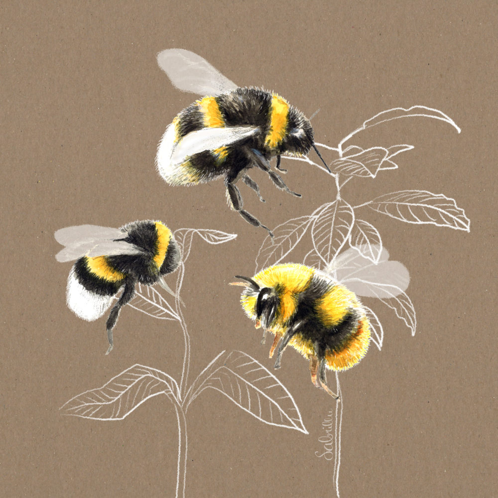 bumble bee drawing on brown background - Illustration by Sabrina Hassler