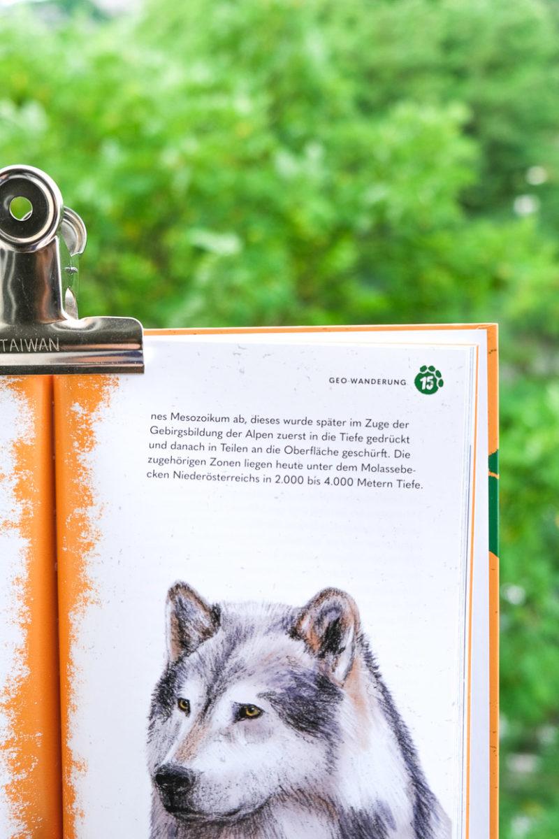 Wolf-Illustration mit Bleistift bearbeitet in Photoshop