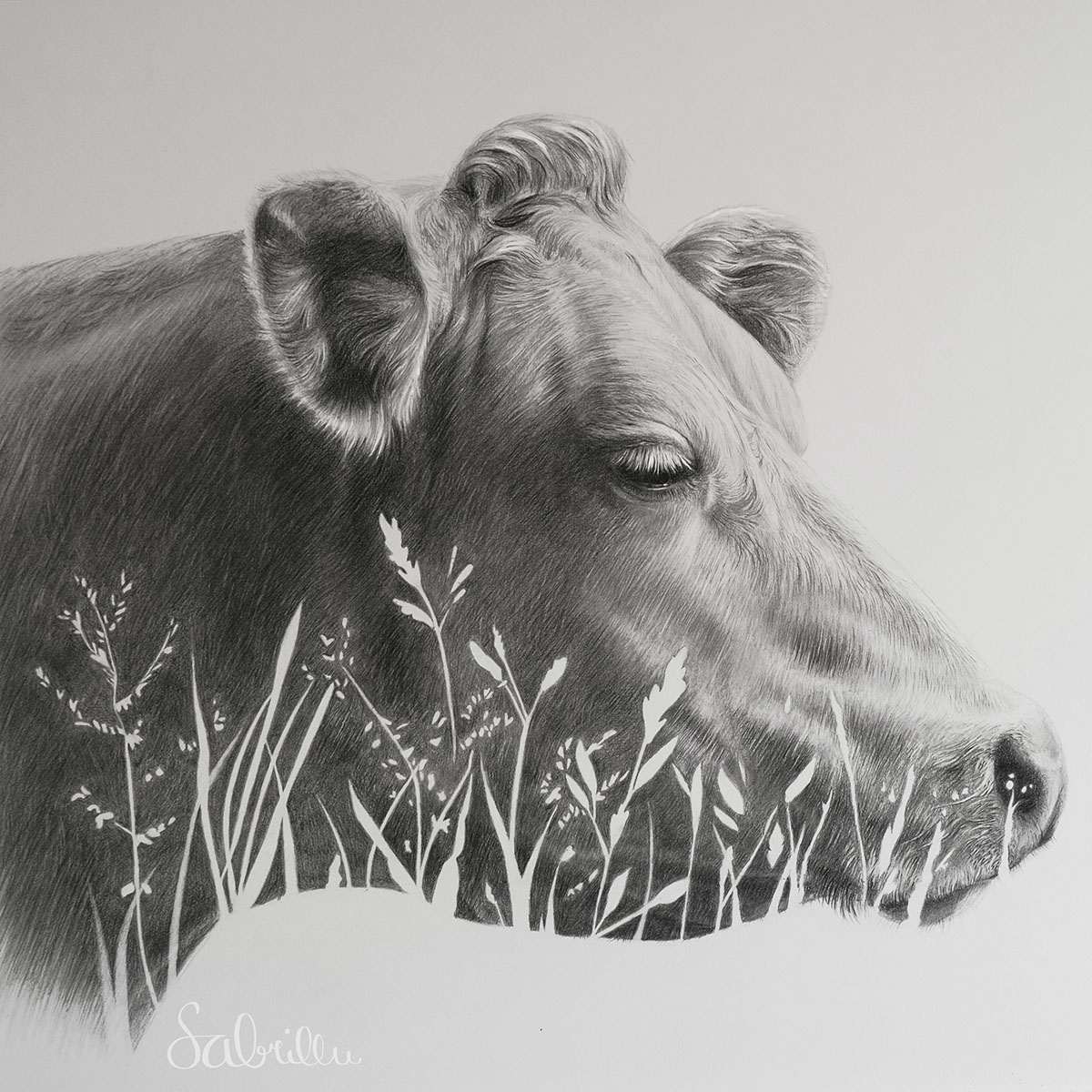 Graphitzeichnung Kuh | Sabrina Hassler